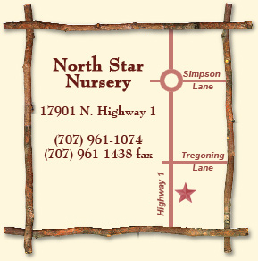 North Star Nursery Inspirations For